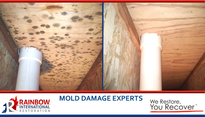 Experts in mold remediation
